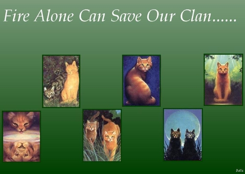cats of Thunderclan