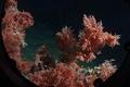 colar reefs, sea cucumber