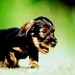 cuteness! - dogs icon