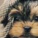 cutie Pye - dogs icon