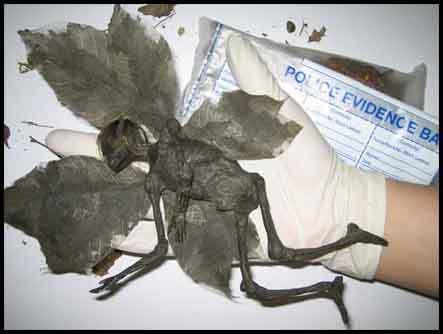 dead fairy found