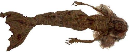 Unbelievable wallpaper titled dead mermaid found
