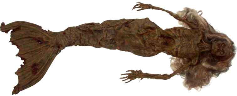 dead mermaid found