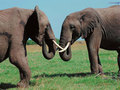elephants - the-animal-kingdom wallpaper