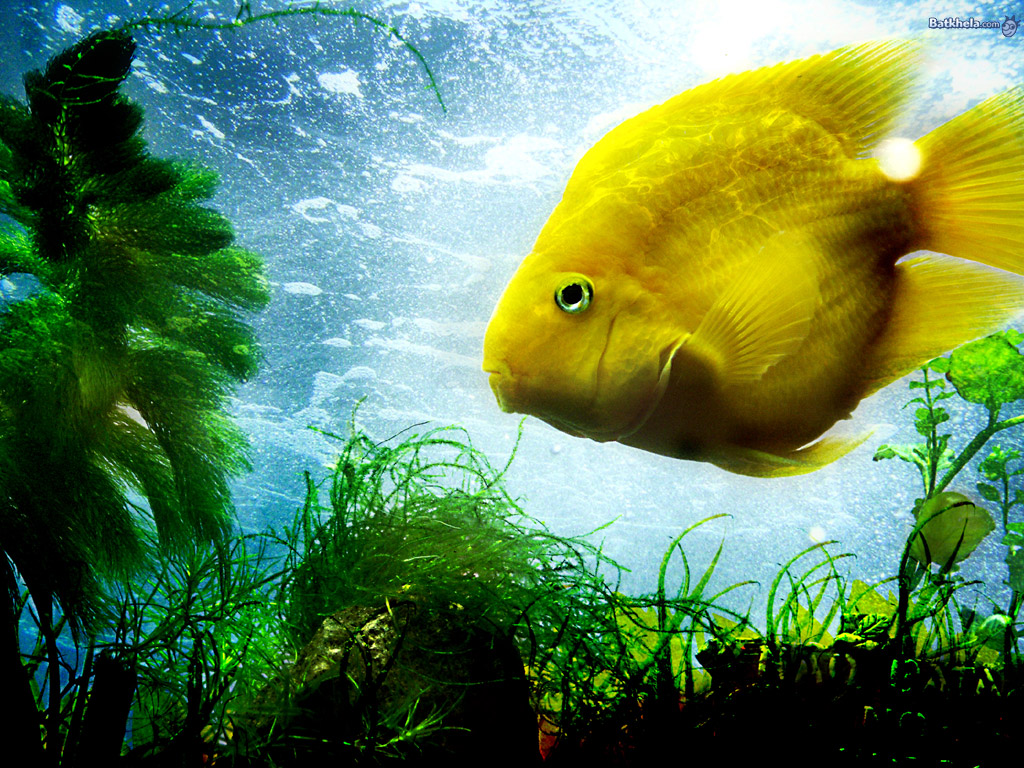 Fish the animal kingdom wallpaper 251159 fanpop for Image of fish