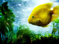 fish! - the-animal-kingdom wallpaper
