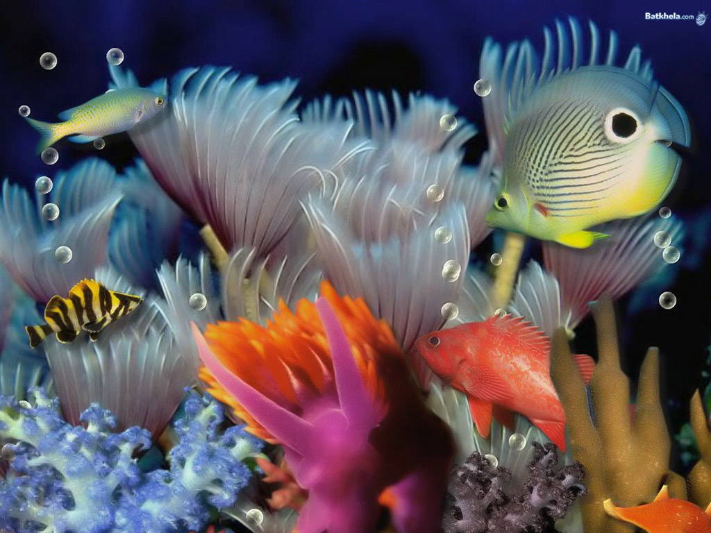 Fish the animal kingdom wallpaper 251167 fanpop for Are fish animals