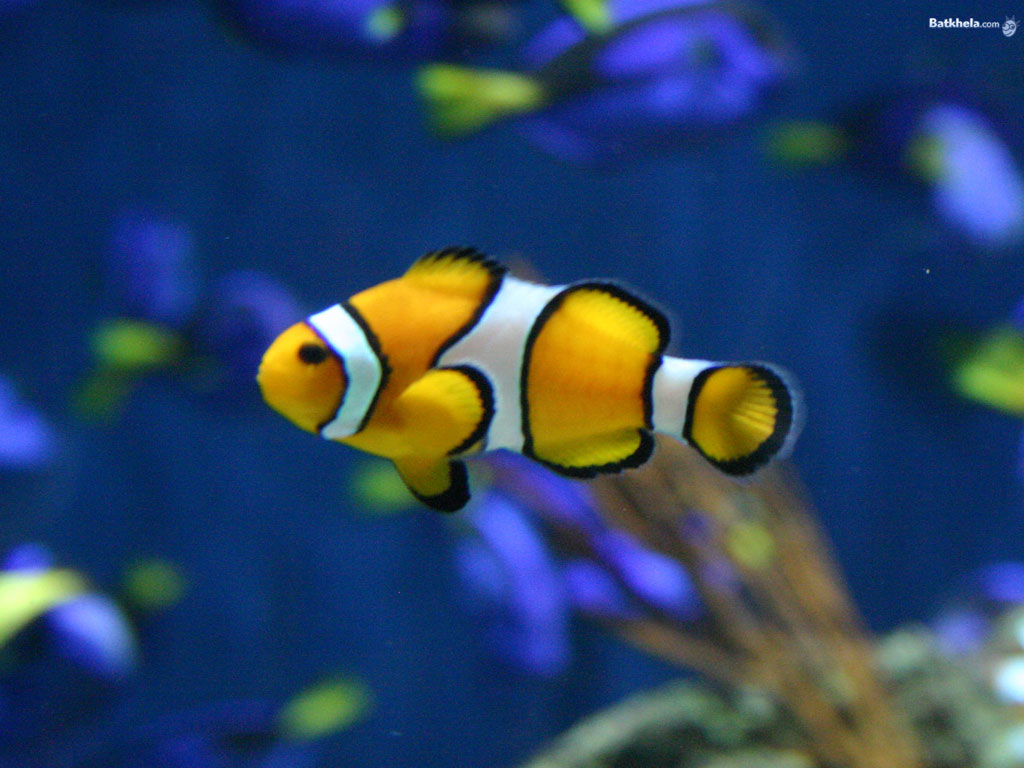 Fish the animal kingdom wallpaper 251174 fanpop for Image of fish