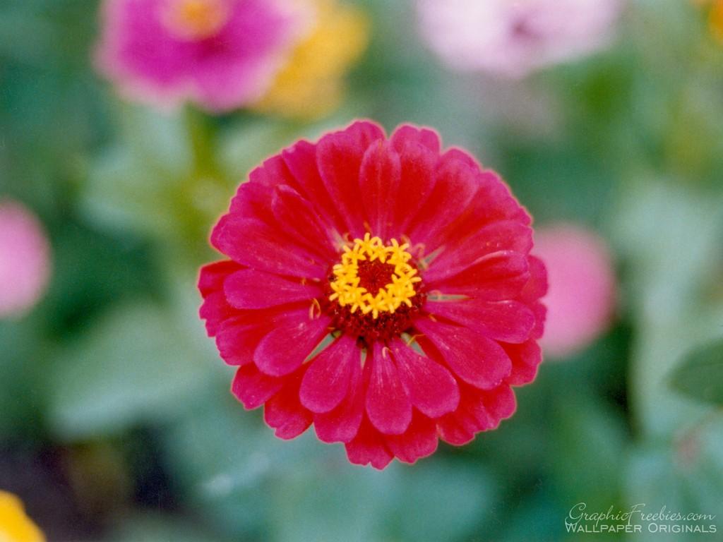 flower power Flowers Wallpaper Fanpop