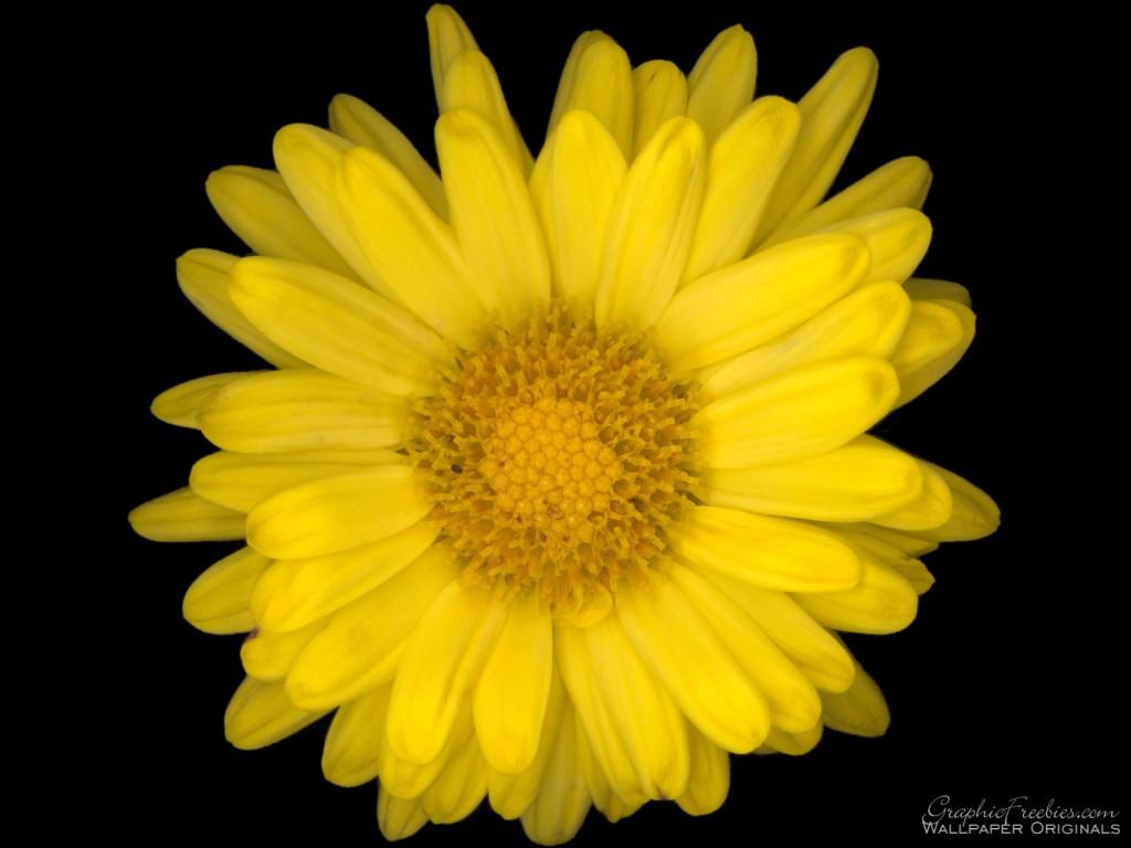 flower power com