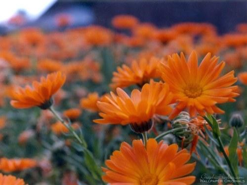 꽃 power