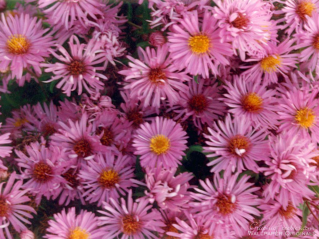 flor power