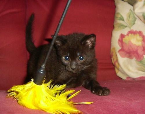 foster gattini