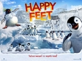 happy feet - happy-feet photo