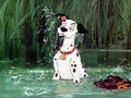 images - 101-dalmatians photo