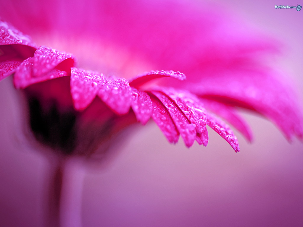 Flowers images lovely-ness HD wallpaper and background ...