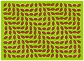 moving optical illusion - unbelievable photo