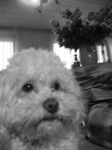 my dof Gino 2