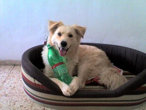 my dog-Moosh:)