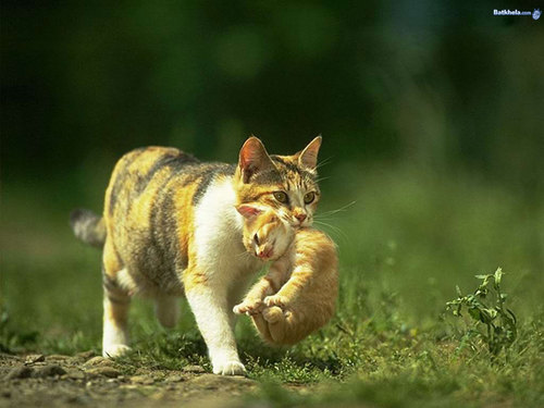 Cats wallpaper called precious!