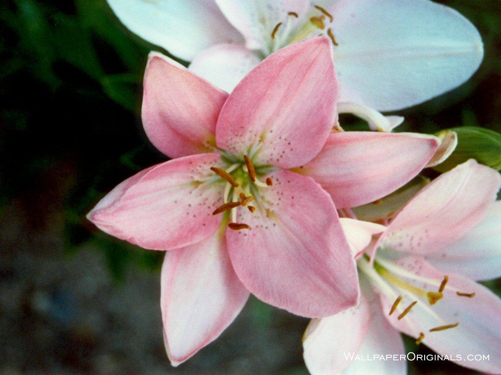 Flowers Wallpaper (247626) - Fanpop