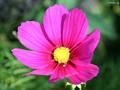 pretty お花