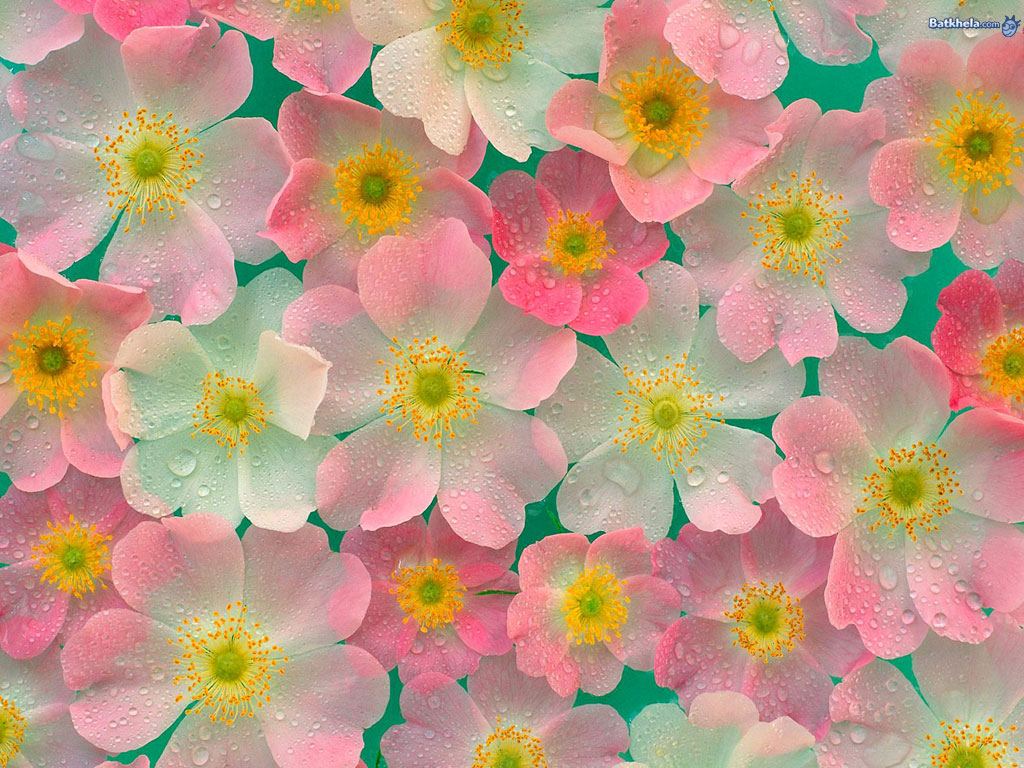 Flowers images pretty-ness! HD wallpaper and background ...