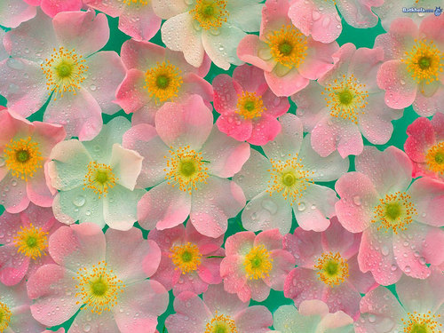 fiori wallpaper entitled pretty-ness!