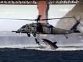 cá mập attack
