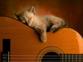 cats - sleeping wallpaper