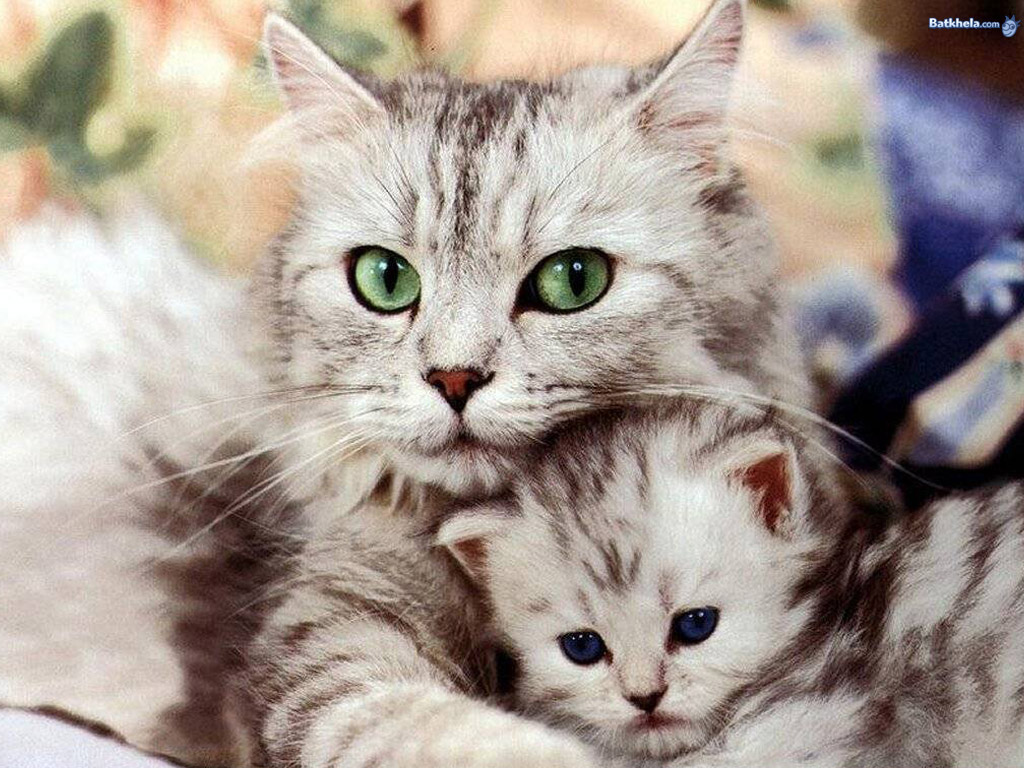 so freakin cute! - Cats 1024x768 800x600
