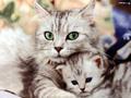so freakin cute! - cats wallpaper