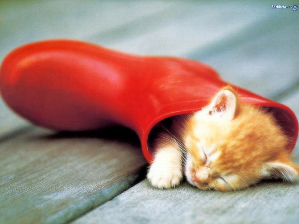 Sleeping Kittens in Boots