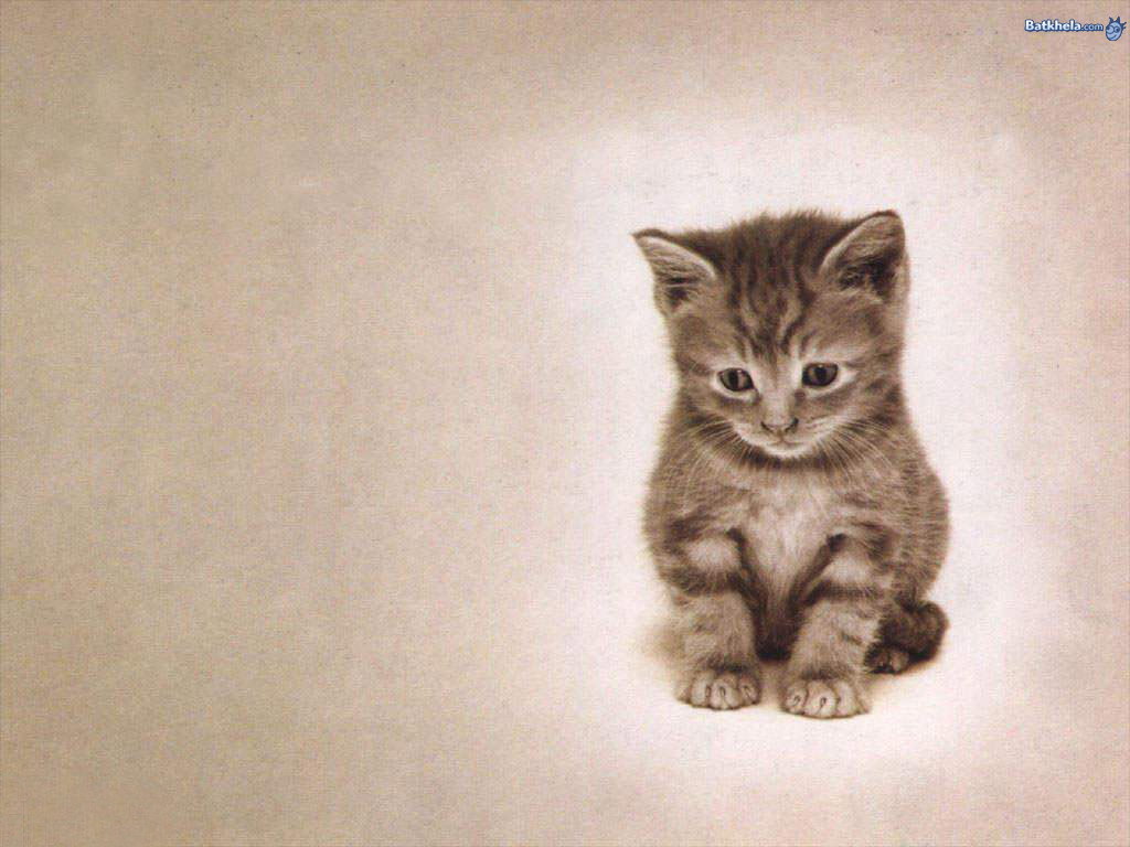 cute cats wallpapers 27
