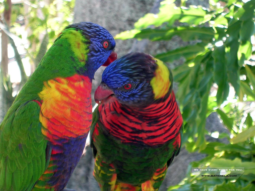 The animal kingdom very beautiful birds