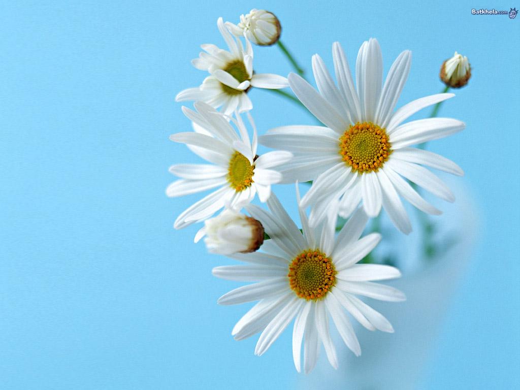 vibrant Flowers Wallpaper Fanpop