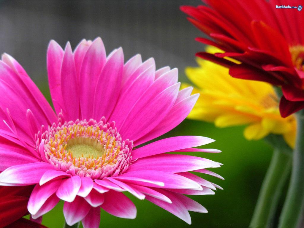 Vibrant flowers wallpaper 248121 fanpop - Vibrant background ...