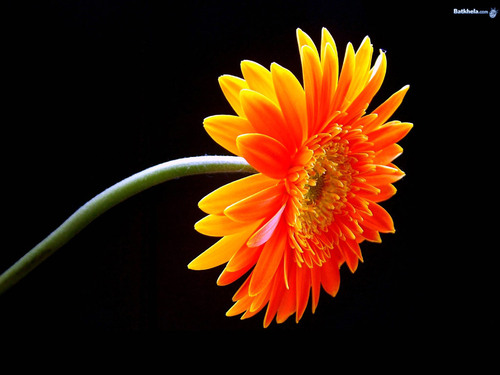 Flowers images vibrant hd wallpaper and background photos - Vibrant background ...