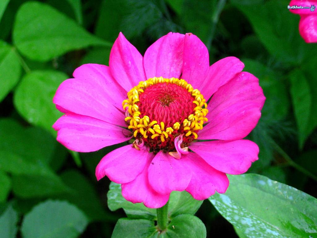 Flowers vibrant