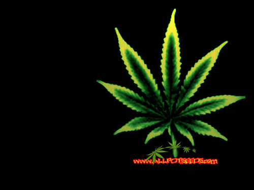 wallpaper - marijuana Wallpaper