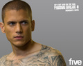 wentworth miller (prison break