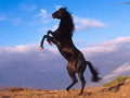 wild horses - the-animal-kingdom wallpaper