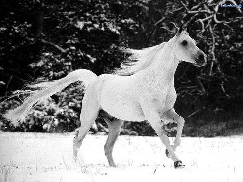 wild 馬