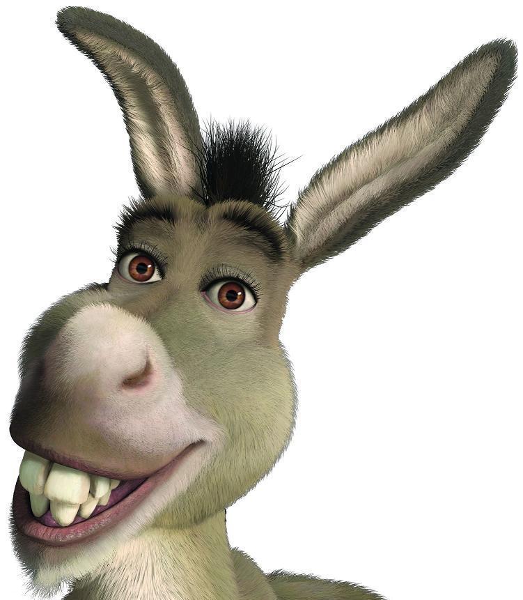 donkey puss