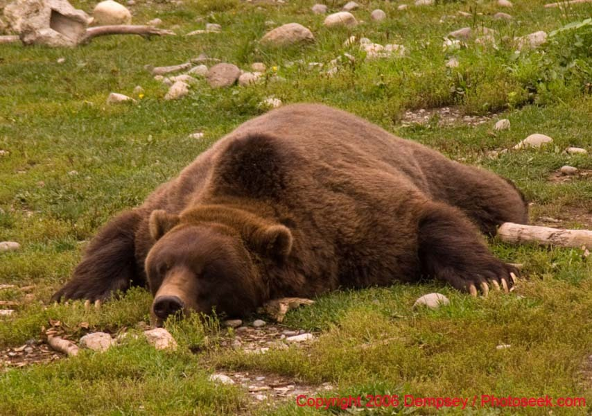 Big bear mountain essay