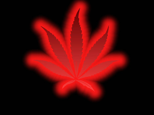red pot leaf wallpaper